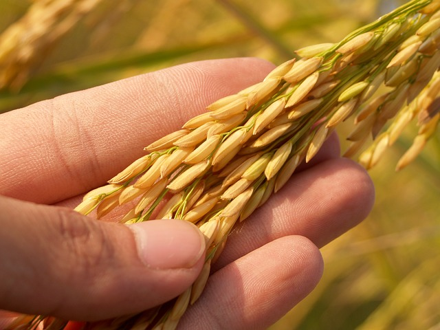 Top 10 Rice Companies Brand in India [2021]