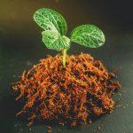 Top 10 Best Rooting Hormones for Gardening in India {2021}